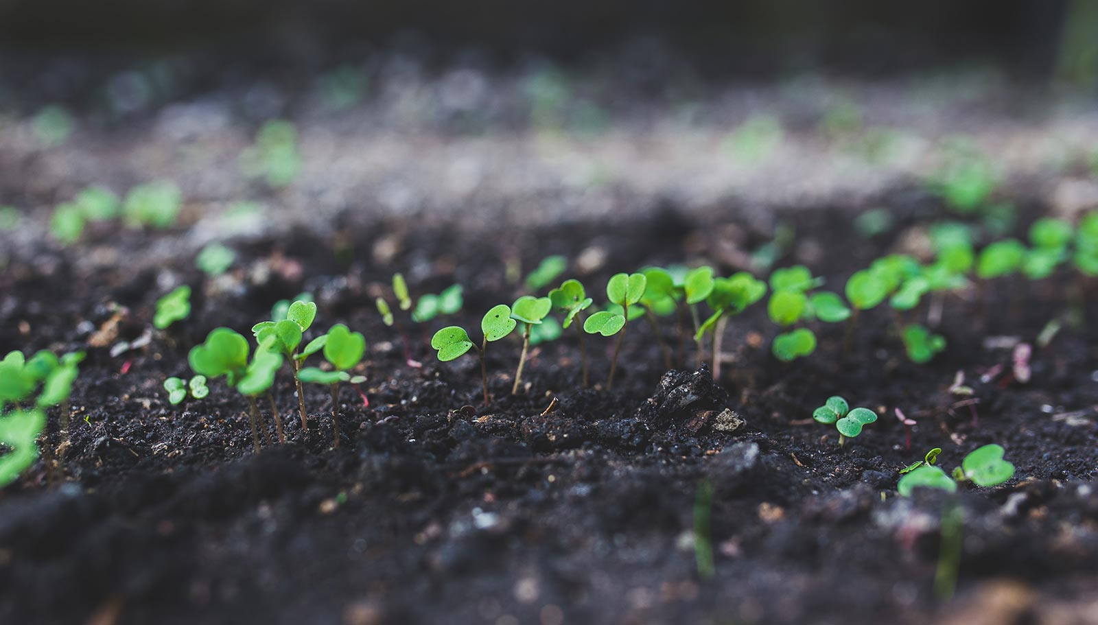 spiritual counselling plants germinating